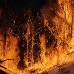 MSB har bett EU om fler brandflyg