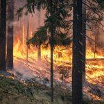 Skogsbränder på flera håll i landet