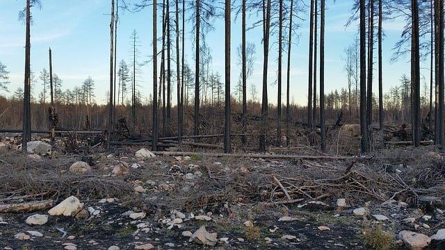 Flera byar utrymda till följd av skogsbränderna